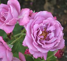a bight flower by ranjini