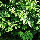 Sunlit Leaves by BlueMoonRose