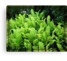Multitude of Ferns in Mirrored Frame Canvas Print