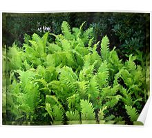 Multitude of Ferns in Mirrored Frame Poster