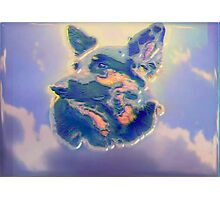 Tania, Portrait of a German Sheperd Photographic Print