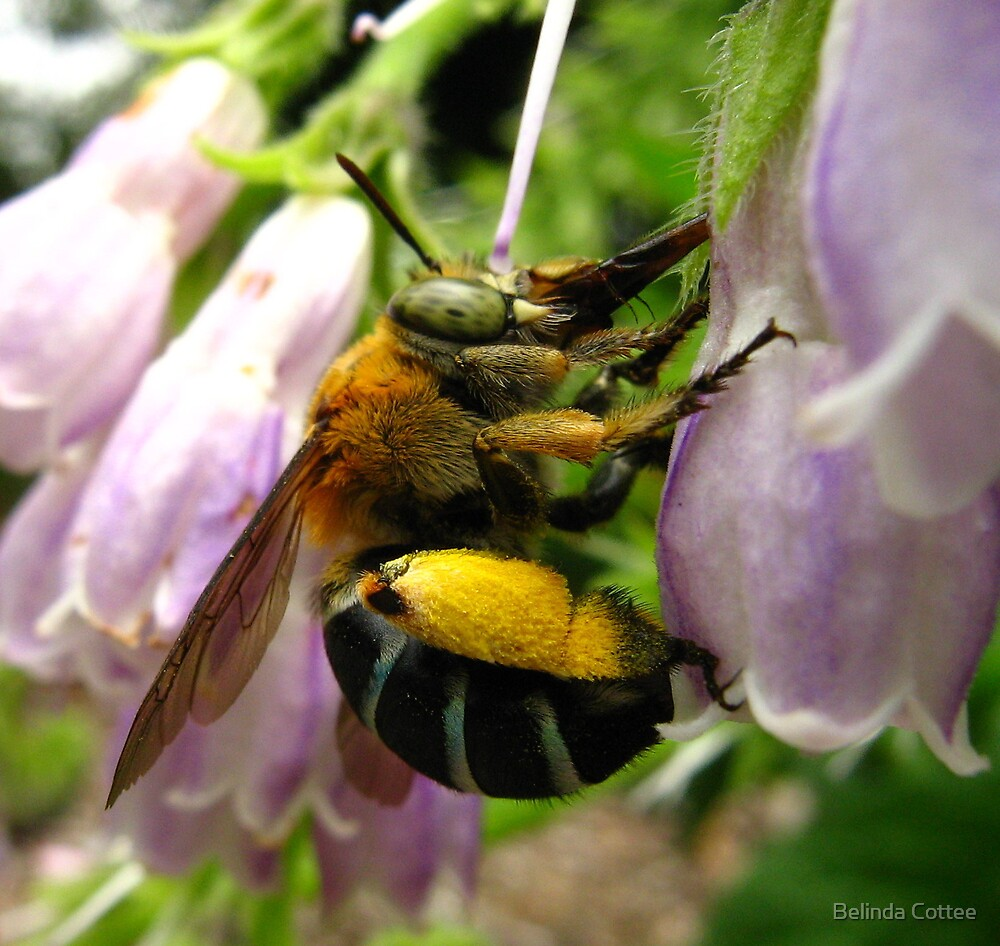 busy bumble by Belinda Cottee