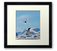 Not of a Feather Framed Print