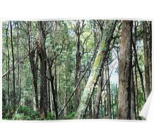 I Need Your Support - Yarra Ranges National Park , Marysville Victoria Australia Poster