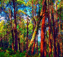 Psychedelic RainForest Series #4 - Yarra Ranges National Park , Marysville Victoria Australia by Philip Johnson