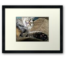 Yes I'm TRYING to Sleep! Framed Print