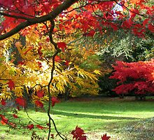 At Westonbirt Arboretum in Autumn by Roantrum