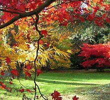At Westonbirt Arboretum in Autumn by Roantrum