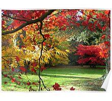 At Westonbirt Arboretum in Autumn Poster
