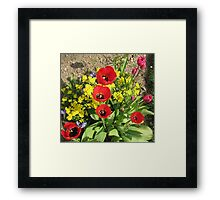 Colourful Corner - Vibrant Red and Pink Tulips Framed Print