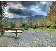 Whinlatter Forest in Autumn by horrgakx