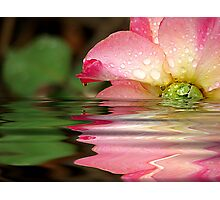 Rose Tears Photographic Print