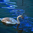 Swan in the water by horrgakx
