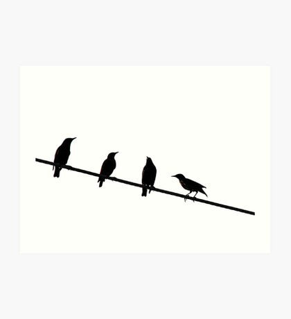 Starlings on a Wire Art Print