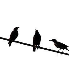 Starlings on a Wire by Ryan Houston