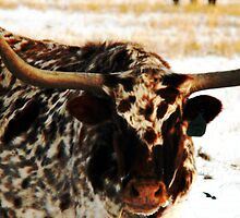 Texas Longhorn by Ryan Houston