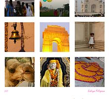 The Colours of India by Lidiya