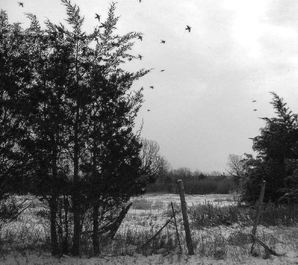 Winter Birds by nikspix
