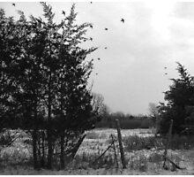 Winter Birds Photographic Print