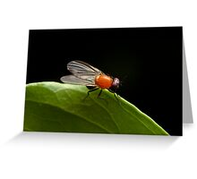 Vinegar Fly Greeting Card
