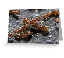 Meat Ants Greeting Card