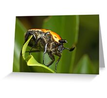 Christmas Beetle Greeting Card