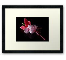 Fuchsia IV Framed Print