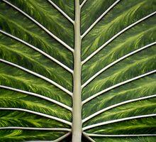 leaf by Karin Mueller