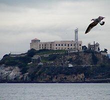 alcatraz by Jahana Bossard