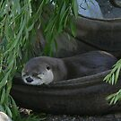 Otter Nap  by Erin  Herlihy