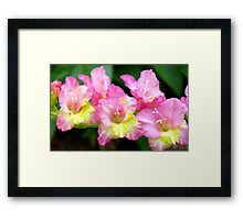 An Admiral  Spray Of Gladness! - gladiolus - NZ Framed Print