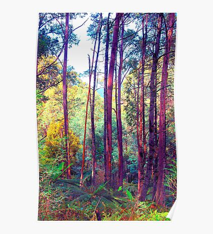 Psychedelic RainForest Series # 7 - Yarra Ranges National Park , Marysville Victoria Australia Poster