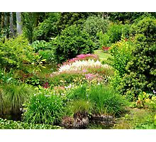 Reawaken Nature's Serum - Maple Glen Gardens - NZ Photographic Print