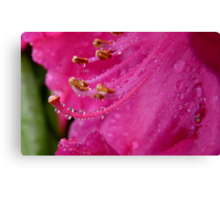 Natures Complex Simplicity! - Rhododendron - NZ Canvas Print