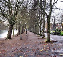 EMPTY TREES AND AN EMPTY EMBANKMENT. by ronsaunders47