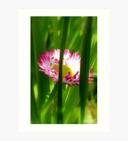 Make way Pink Bloom Peeking Through! - Wild Daisy - NZ - Southland Art Print