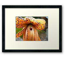 A Lady On The Spot!!! - Ladybug On Tiger Lily - NZ Framed Print