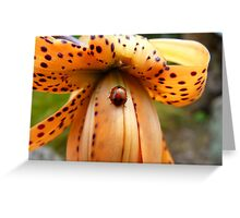 A Lady On The Spot!!! - Ladybug On Tiger Lily - NZ Greeting Card
