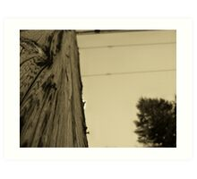 Touch the Texure: Wing-ed Wood (sepia) Art Print