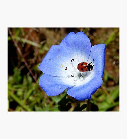 The Cyan Lady... - Ladybird - NZ Photographic Print