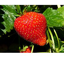 Natural Sweets - Fresh Garden Strawberry - NZ Photographic Print