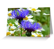 Passion Amongst The Daisies - Bachelor's Button - Southland NZ Greeting Card