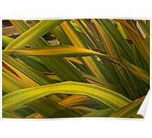 variegated leaves Poster