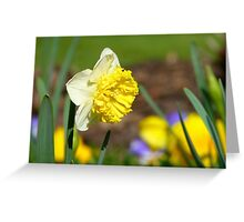 Natures Frills And Ruffles - Daffodil - NZ Greeting Card