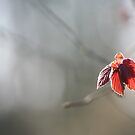 Red Spring Leaf by Taka