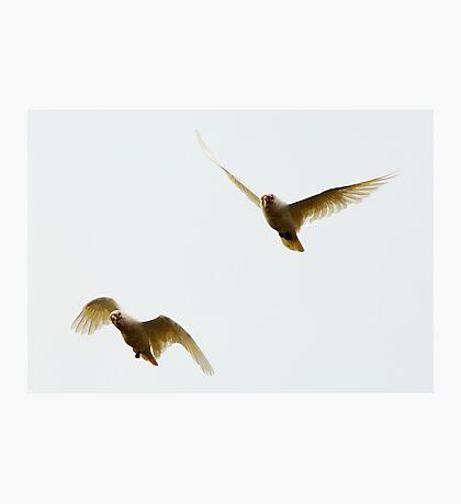 Flight Squadron Photographic Print