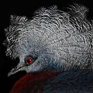 crowned pigeon by Jo-PinX
