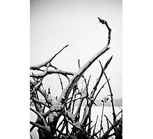 Uprooted Photographic Print