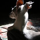 Italian Greyhound in Shadow by Rebekah  McLeod