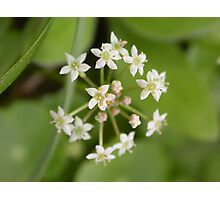 Flowerworks Photographic Print